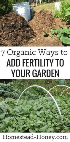 Grow more food, have healthier soil and fewer pests when you add fertility to your garden with one of these 7 organic methods: Cover crops, compost, urine, organic amendments, teas, mulch, and whey. | Homestead Honey