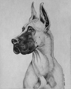 Custom pet portrait of great dane dog.  Follow link for more information about ordering your own custom pet or equine artwork. Perfect gift for the pet lover or horse lover.