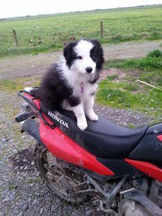 Cleo #puppydog