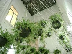 Mexico city artist jeronimo hagerman, who is fond of plants, has an interesting installation at the casa vecina cultural space in the centro historico. Faux Plants, Green Plants, Indoor Plants, Bamboo Plants, Indoor Garden, Hanging Ferns, Hanging Gardens, Sky Garden, String Garden