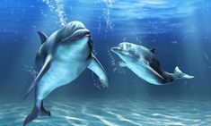 Custom murals wallpaper 3 d underwater world whale wallpaper boy children room sitting room TV setting wall paintings decor Floor Murals, Wall Murals, Wall Art, Dolphin Hd, Dream Blanket, Share Pictures, Shedd Aquarium, Baby Dolphins, Animated Gifs