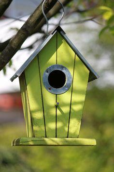 Simple bird house!