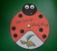 Lady lifecycle butterfly pin rotation
