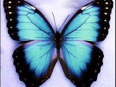 in a gadda da vida-ironbutterfly (FULL SONG)