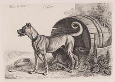 "Hond: ""Othello"" by artist Johann Adam Klein Othello, Animal Drawings, Moose Art, Museum, Dogs, Artist, Animals, Animales, Animaux"