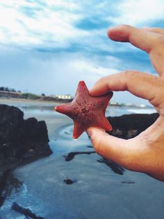 OMG once when I lived in Florida we went to the beach and I couldn't stop finding starfish