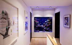 Luxury Custom Reef Aquarium - Aquarium Architecture Wall Aquarium, Jellyfish Aquarium, Glass Aquarium, Home Aquarium, Aquarium Design, Saltwater Aquarium, Freshwater Aquarium, Henley Homes, Aquarium Architecture