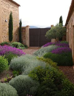 Have to go with xeriscaping and low water in the cottage garden. Like these plants in the Jardin Toledo Gravel garden, xeriscaping, dry garden, mediterranean garden. Dry Garden, Gravel Garden, Gravel Patio, Side Garden, Pea Gravel, Garden Water, Garden Pond, Garden Beds, Tuscan Garden
