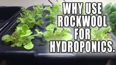 A short video on why I use rockwool grow cubes for my hydroponic systems, Link for amazon deal for cheap cubes: http://www.amazon.com/gp/product/B0087SJ3U0/r...