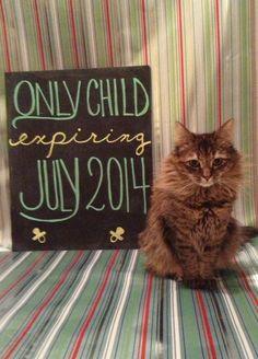 maternity photoshoot with cats fotografia gestante grávida com gatos