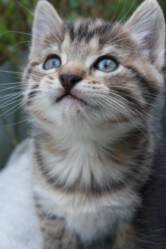 Cats have hope Cool Cats, I Love Cats, Kittens Cutest, Cats And Kittens, Exotic Cats, Kinds Of Cats, Character Base, Maine Coon, Funny Cats