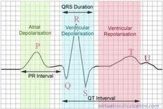 EKG wave-always good to know....