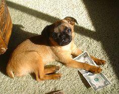 Google Image Result for http://www.dogbreedinfo.com/images9/Petit_BrabanconBrussels_GriffinBella2dw.jpg