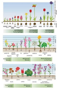 time charts for fall-planted bulbs, spring-planted bulbs and perennials. Bloom time charts for fall-planted bulbs, spring-planted bulbs and perennials. Bloom time charts for fall-planted bulbs, spring-planted bulbs and perennials. Diy Gardening, Organic Gardening, Flower Gardening, Tulips Garden, Container Gardening, Vegetable Gardening, Gardening Quotes, Zinnia Garden, Daylily Garden