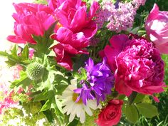 a spring collection of garden flowers, peonies, daisy, Campanula Glomerata, rose, Globe Thistle