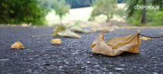 365 Tage Fotochallenge: Tag 248 - Da fallen sie die Blätter