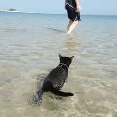 GIF Little panther