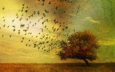 Paulo Coelho: Αν κάτι έκανε τον κύκλο του, άφησε το να φύγει…