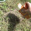 How to Get Rid of Ant Hills: Top 10 Best Ways to Destroy an Ant Hill - Pest Hacks Natural Remedies For Ants, Home Remedies For Ants, Ants In Garden, Garden Pests, Fire Ant Bites, Kill Fire Ants, Ant Spray, Ants In House, Ant Problem
