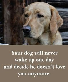 Your dog will never wake up one day and decide he doesn't love you anymore.