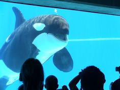 Sea World really hasn't done enough for their whales. Ending the shows and breeding is only one step on a long road to justice.