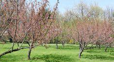 Gradina japoneza parcul Regele Mihai I Trunks, Plants, Drift Wood, Tree Trunks, Plant, Planets