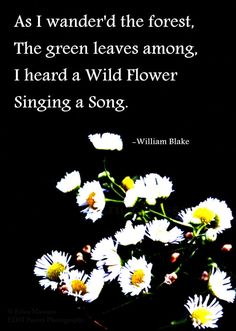 Scent of Wildflowers 4-Fine Art Photography by EDMPoetryPhotography-   Erica Massaro   Wildflowers   Flowers   White   Yellow   Green   Black   William Blake Poem   William Blake Quotes   Poetry and Prose   Inspirational Quotes and Poems   Spring   Summer   Nature   Beauty  