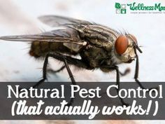 Natural Pest Control that actually works 365x274 5 Natural Pest Control Options That Work!