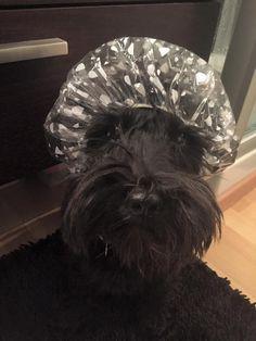 Scottie Dog ready for a bath! More