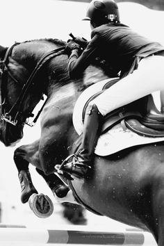equestrian equine cheval pferde caballo stadium show jumping | BW jumper
