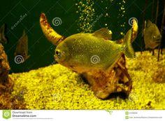 Image of green, eyes, exotique, danger - 61058262 Planted Aquarium, Vectors, Sign, Stock Photos, Pets, Green, Animals, Image, Exotic