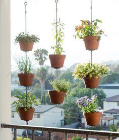 plante-agatatoare-11