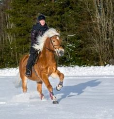 Om den som skal gifte seg aldri har prøvd ridning før, kan Ridning i Utdrikningslag være en flott aktivitet og prøve. Her kan alle prøve seg om de vil og få opplæring av en instruktør. Klikk på bildet for og finne firmaer som tilbyr dette. Leather Gloves, Weather, Horses, Cool Stuff, Animals, Style, Swag, Animales, Animaux