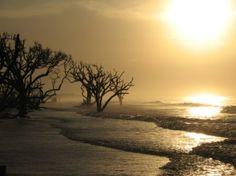 Botany Bay Edisto | Visit edistoisland.com