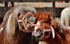 Horses Bridal [HD]