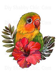Cartoon Sketch Images, Bird Drawings, Animal Drawings, Parrot Drawing, Parrot Painting, Parrot Image, Cartoon Birds, Cartoon Bird Drawing, Love Birds Drawing