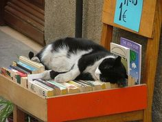 What is it about cats and books? They seem to belong together.