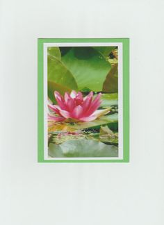 """Frog  and Lily 45/8  x 6 1/4"""" #GardenKeeperCards #AnyOccasion"""