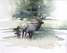"""Crossing The Madison"" study - elk - watercolor painting by Morten E. Watercolor Pictures, Watercolor Artists, Watercolor Animals, Watercolor Landscape, Watercolor Paintings, Watercolors, Watercolor Trees, Watercolor Portraits, Abstract Paintings"