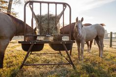 "Priefert Pasture Feeder This feeder features a sturdy double tub poly liner and a hay rack. The legs are powder-coated over galvanized tubing for extra durability. *  The Pasture Horse Feeder with Hay Rack is ideal for feeding horses in pastures or paddocks. The feeder features a hay rack over a durable double tub poly liner with a 10.5"" pan depth, making this feeder a great option for feeding both hay and grain."