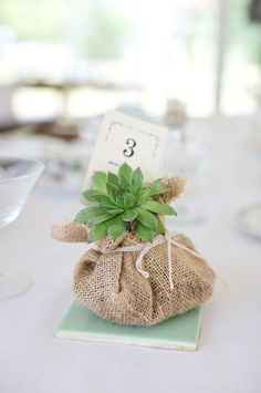 instead of using pots, put it in burlap.  then it can be planted.