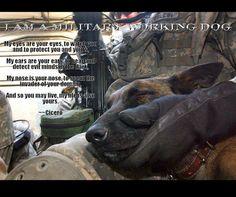 Military Working Dogs http://media-cache-ec0.pinimg.com/originals/c4/2e/4f/c42e4fa3332c6ec0474913a7986e6314.jpg