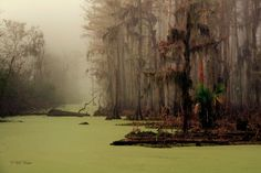 There are a number of spooky tales from Louisiana, but one of the most enthralling is that of Manchac Swamp. First of all, Manchac is rumoured to be haunted. It's also rumoured to be the haunt of Rougarou, the Cajun werewolf. As well as that, it's said to be haunted by Julia Brown, a once practising voodoo priestess, who put a curse on the entire town the day she died. Legend says that on the day of her funeral in 1915, a deadly hurricane ripped through the town, destroying three villages…