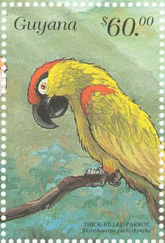 Thick-billed Parrot stamps - mainly images - gallery format