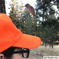 Confused Hummingbird is adorable Funny Animal Pictures, Cute Funny Animals, Funny Cute, Hilarious, Beautiful Birds, Animals Beautiful, Animals And Pets, Baby Animals, Beste Gif