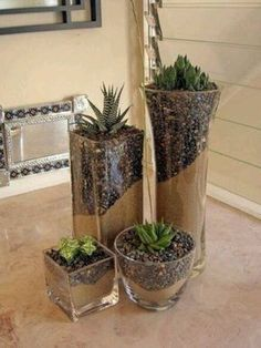 Glass succulent plants