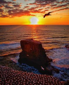 @itsbernie81's #sunset is no joke.  Rugged and windswept, the cliffs of Muriwai are home to 1,200 pairs of gannets who nest there from August to March. Thanks for sharing by using #travelzoo. #NewZealand