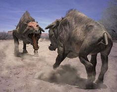 How did entelodont go extinct? Well once bear dogs arrived in the area it dominated the area. with hyaenodon still dominating entelodont had to many rivals for food. when bear dogs attacked they drove entelodont away. starving due to to many predators to deal with. Nest we have a creature you know about THE HUMAN