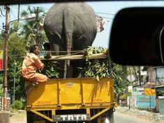 12 Bizarre Photos of Animals Being Transported - Oddee The Things They Carried, Bizarre Photos, Amazing India, Mughal Empire, Elephant Love, The Beautiful Country, Mysore, Largest Countries, Karnataka