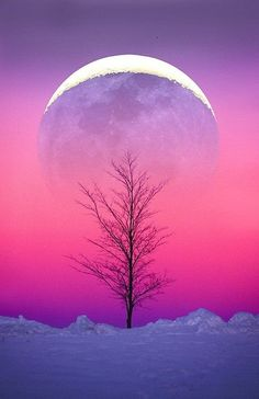 Moon, tree, and snow